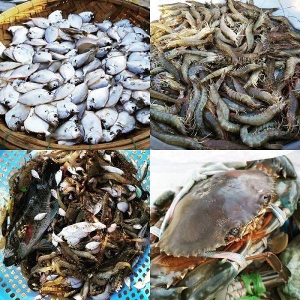 Hệ sinh thái đa dạng tạo ra nhiều món ăn ngon